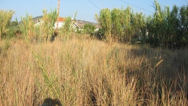 Πωλείται οικόπεδο στον Κάμπο της Άντισσας Λέσβου.